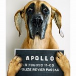 Problemhunde: Kuno / Apollo / Beverly