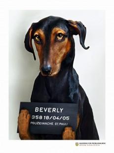 Problemhunde: Kuno / Apollo / Beverly